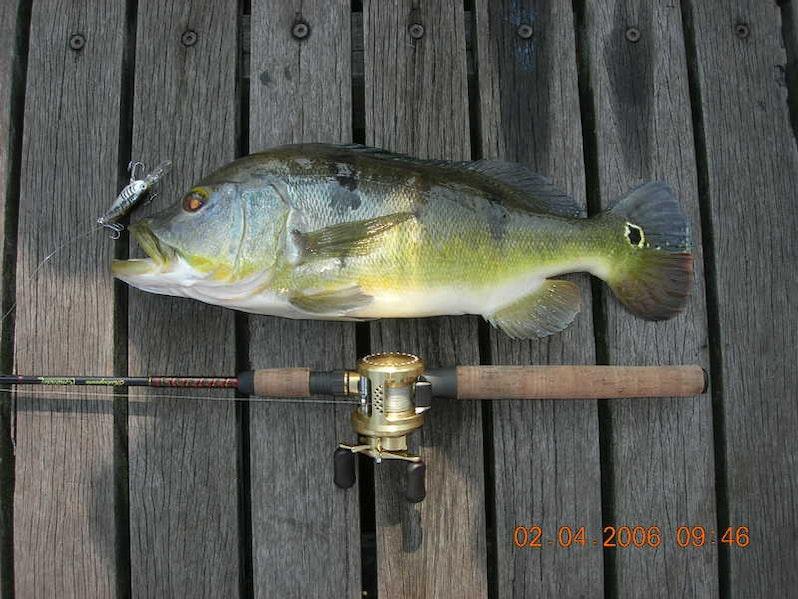 new blinking lure cr @ lsr - fishingkaki, Reel Combo